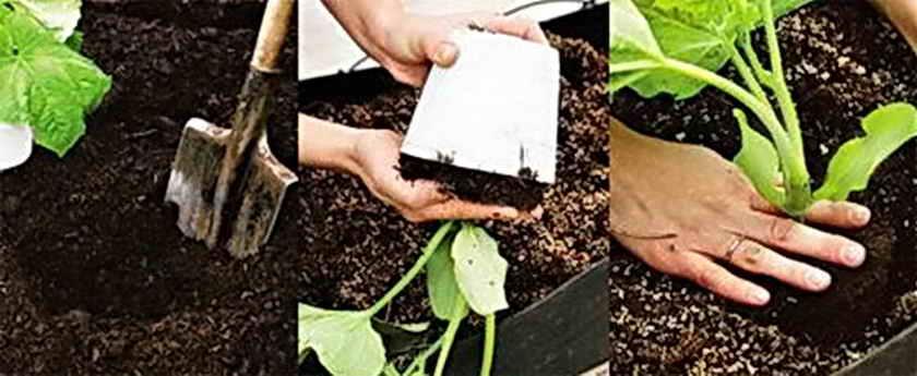 Как ухаживать за огурцами в открытом грунте