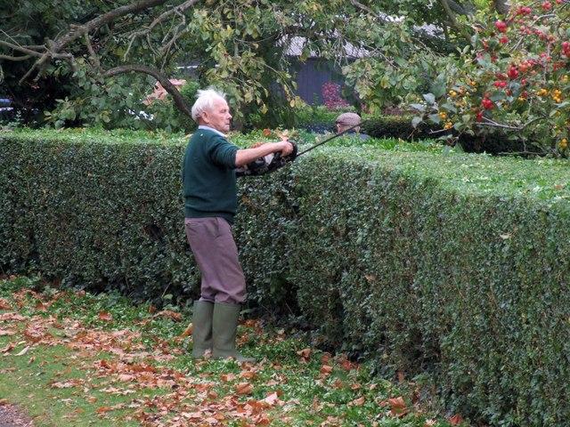 Живая изгородь из боярышника: особенности посадки и ухода