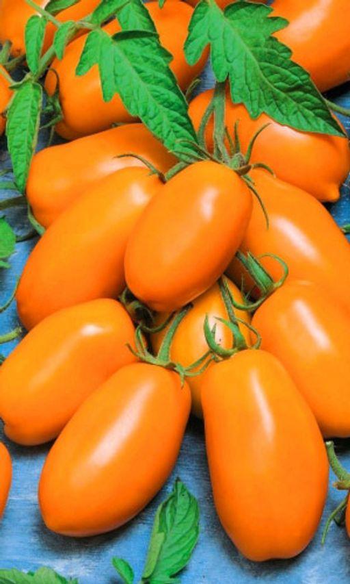 Томат золотая рыбка: характеристика и описание сорта помидоров, его агротехника, отзывы выращивающих и фото урожая