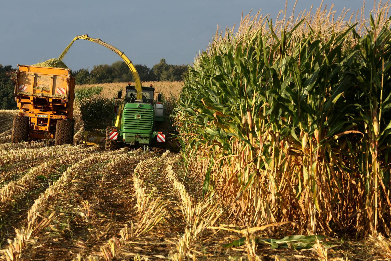 ✅ о возделывании кукурузы на силос: норма высева, технология, урожайность сортов - tehnomir32.ru