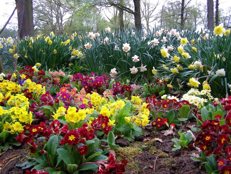 Что сажать на рассаду в апреле: список цветов с фото, названиями