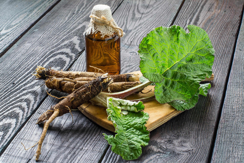 Ревень: полезные и опасные свойства овоща   food and health