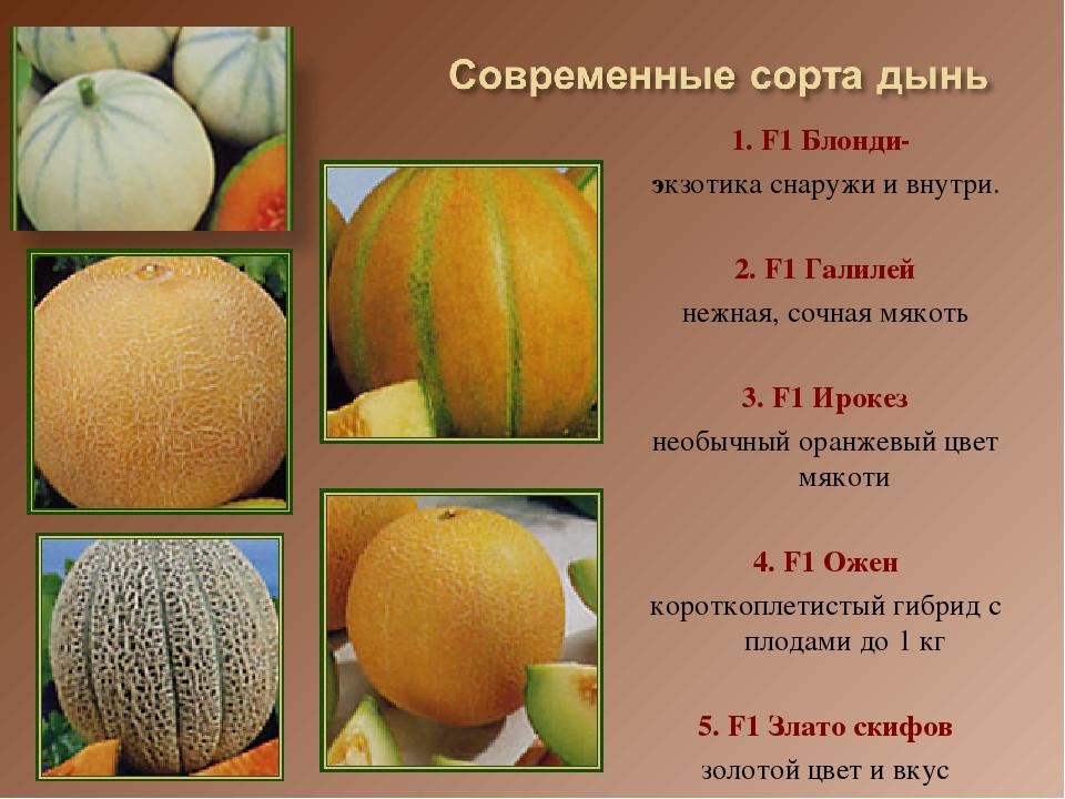 ᐉ как называется дыня внутри оранжевая - godacha.ru