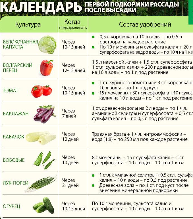 Чем правильно подкормить морковь для роста в открытом грунте народными средствами