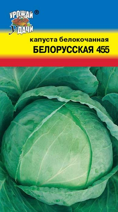 Капуста белорусская – описание сорта, фото, отзывы