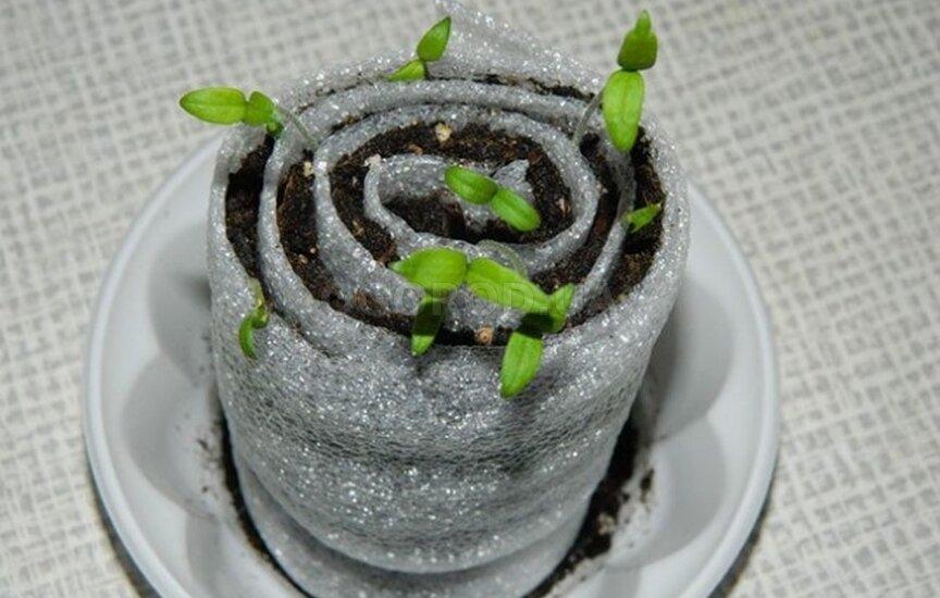 Как посадить томаты в улитку?