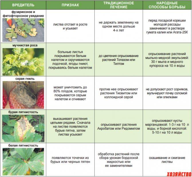 Признаки болезней и нападения вредителей на клубнику, методы лечения