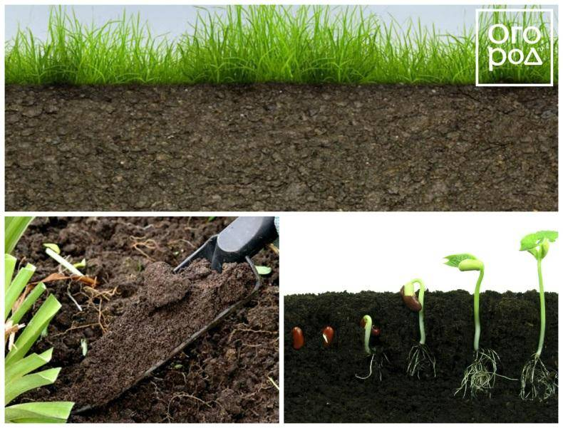 Как можно улучшить плодородие почвы? узнайте, от чего зависит плодородие почвы