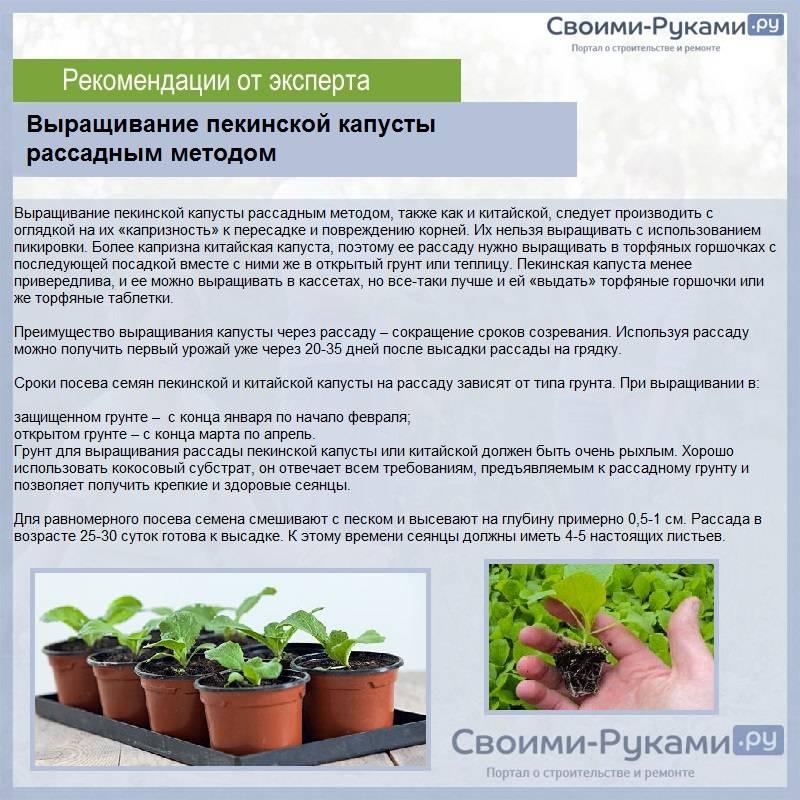 Как вырастить рассаду цветной капусты самому на supersadovnik.ru