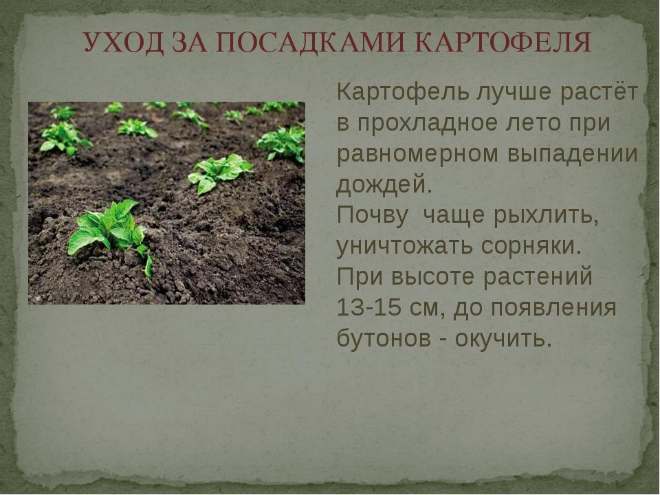 Почему не всходит картофель: через сколько дней всходит картофель после посадки, уход за картофелем после всходов, советы