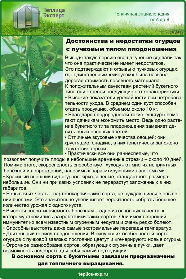 Как успешно возделывать арбузы в беларуси – советы и отзывы дачников