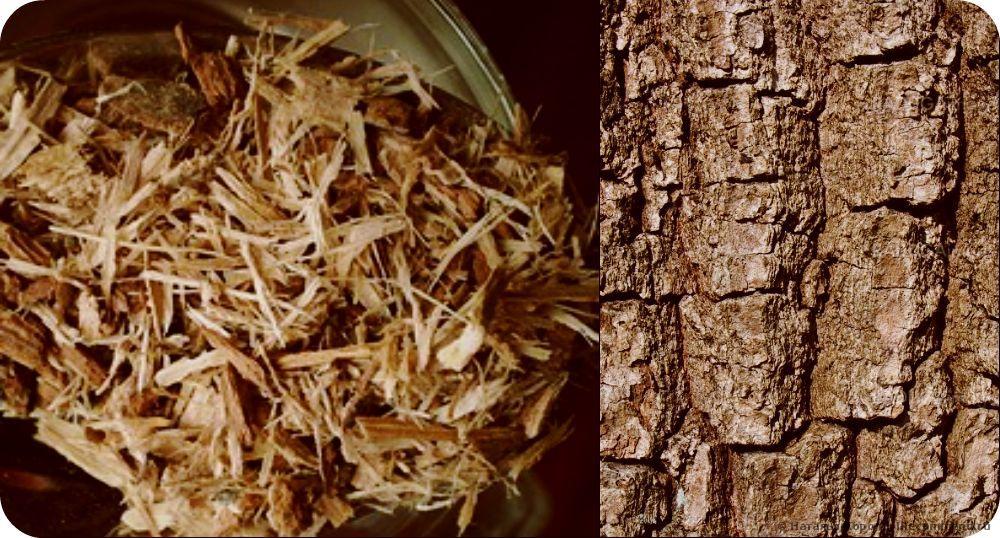 Отходы коры деревьев: виды, чем отличается материал, снятый с лиственных, плодовых и хвойных древесных пород, фракция и роль размера кусков