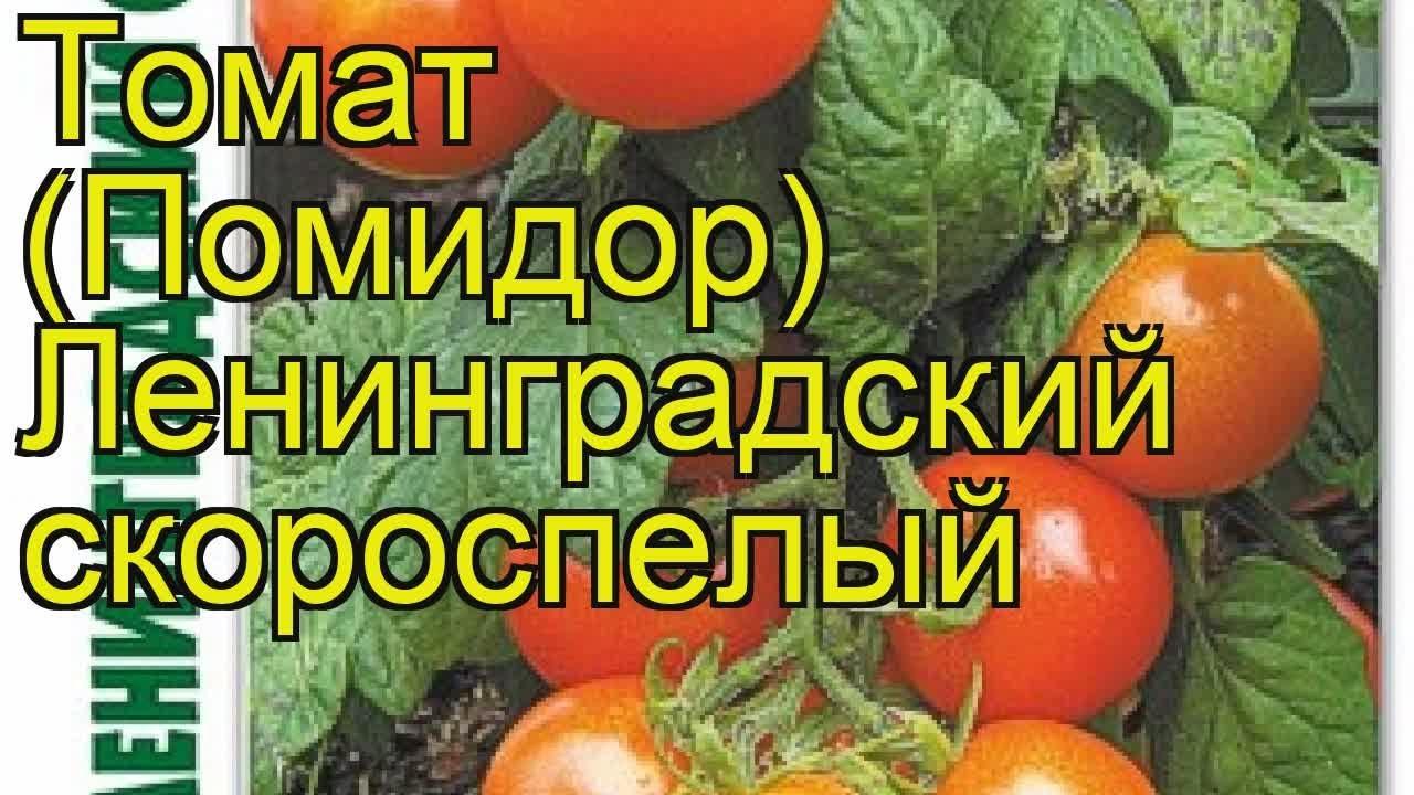 Томат сибирский скороспелый характеристика и описание сорта