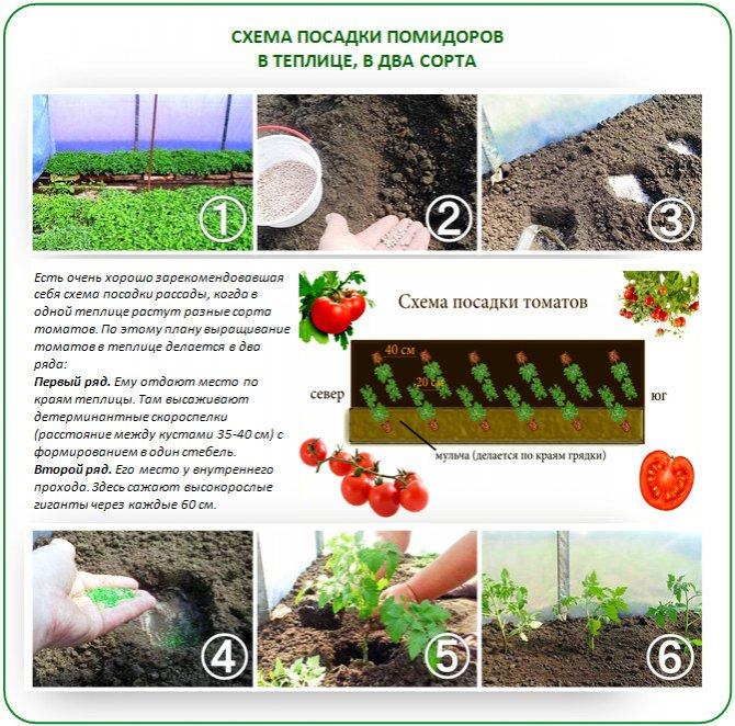 Как вырастить крупные помидоры: как выбрать сорт больших томатов, каким образом происходит подготовка семян и почвы и посадка овоща, а также последующий уход русский фермер