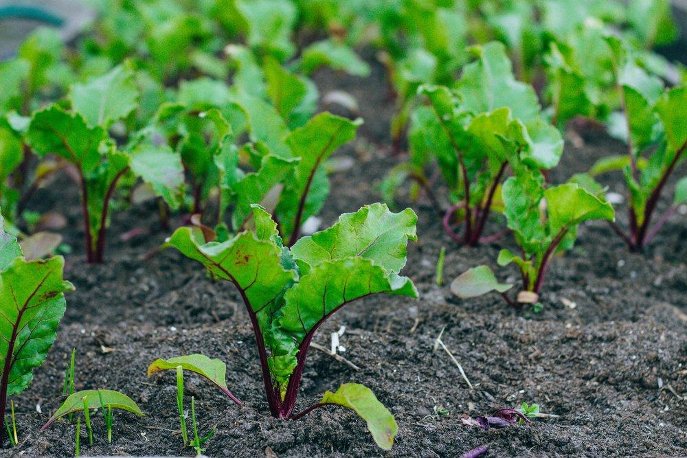 Можно ли подкормить морковь солью и как это сделать правильно? практические рекомендации огородникам