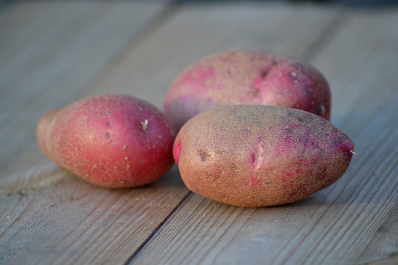 Картофель чародей: описание и характеристика сорта, посадка и уход, отзывы с фото