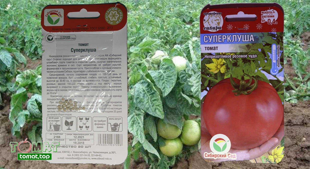Томат клуша: отзывы, урожайность, характеристика и описание сорта
