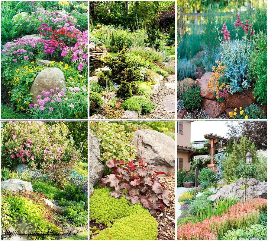 Цветы для клумбы (105 фото): какие растут в цветниках с декоративной травой, названия осенних и летних растений, лаватера с розами и другие комбинации
