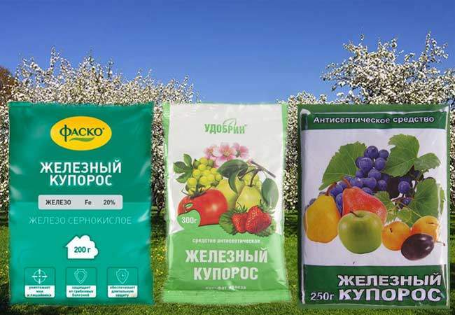 Обработка сада железным купоросом осенью и весной: нормы, как разводить (пропорции) и применять