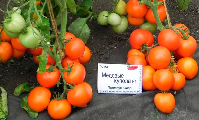 Красивые, крупные помидоры с великолепными вкусовыми качествами — сорт томата «золотые купола»