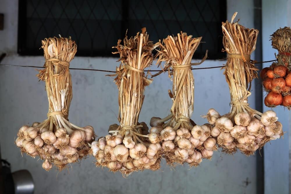 Когда убирать лук с грядки на хранение посаженный под зиму и весной