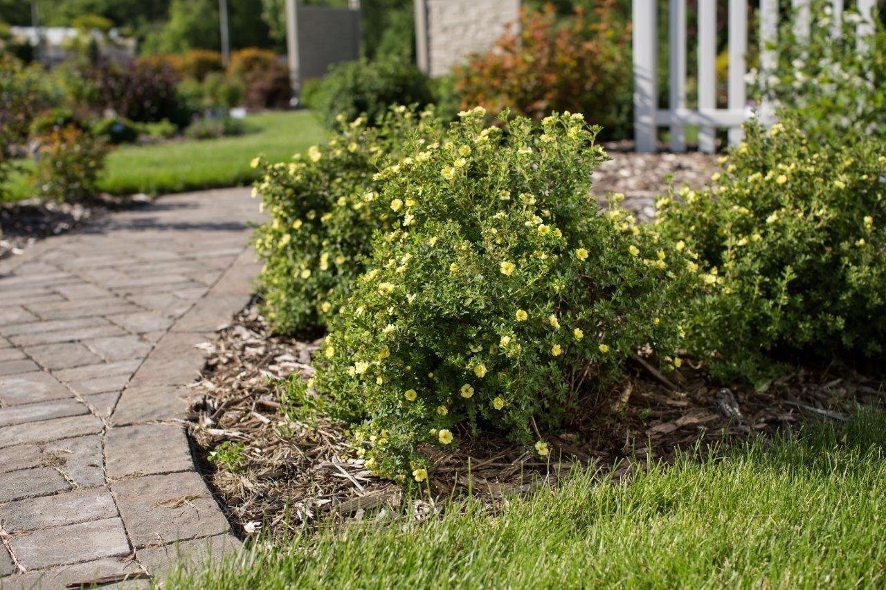 Бордюрные низкорослые цветы для оформления клумбы