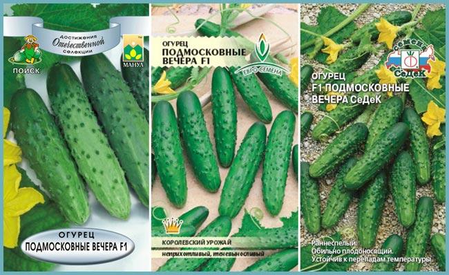Огурец подмосковные вечера: характеристика и описание сорта, выращивание и урожайность с фото