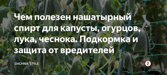 Народные средства от вредителей капусты – чем обработать растения - огород, сад, балкон - медиаплатформа миртесен
