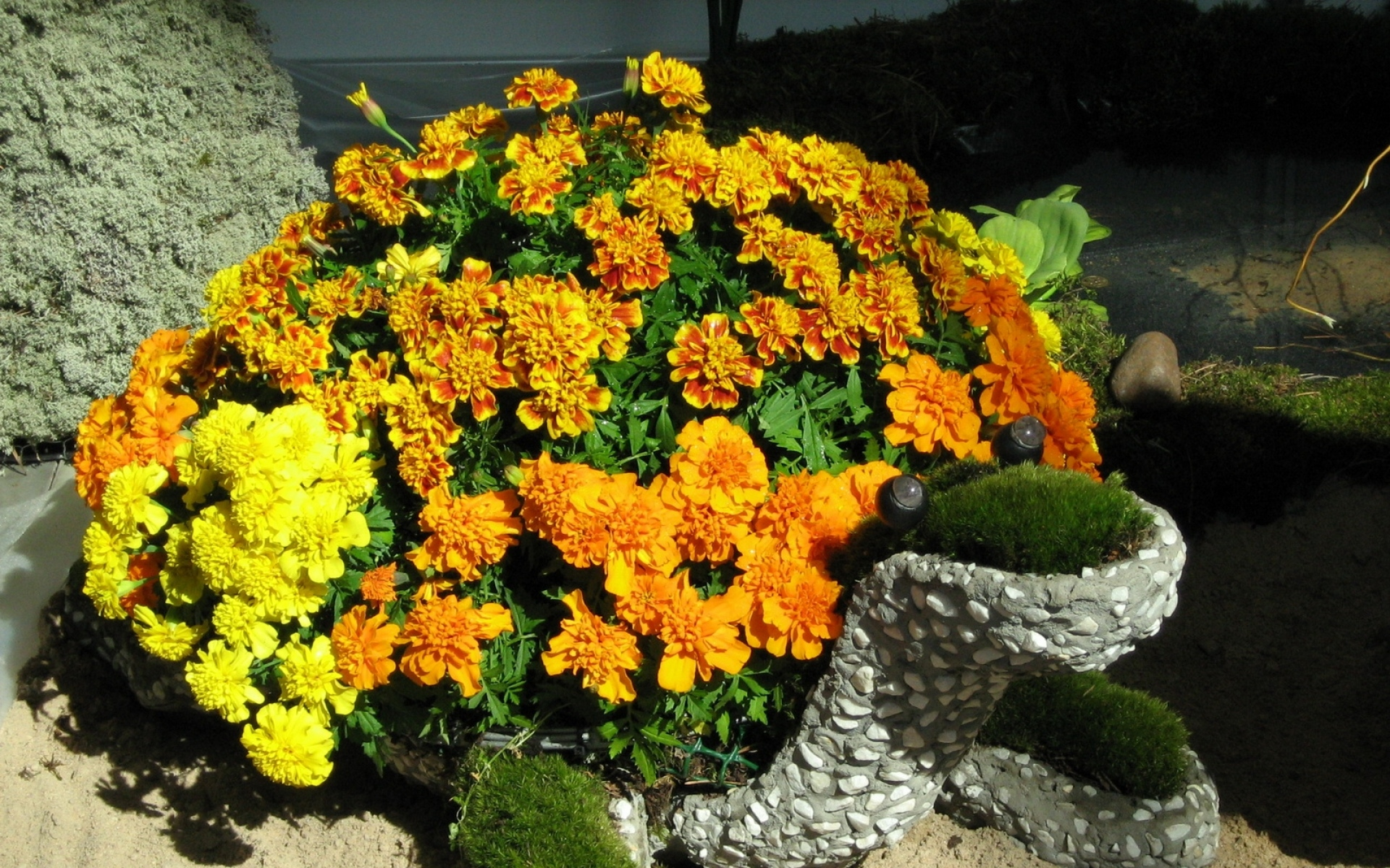 Эксперт рассказала попунктам, как создать цветник, который будет радовать досамых заморозков