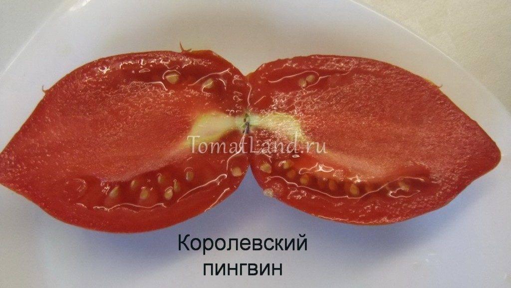 Томат пинк пионер f1: отзывы об урожайности помидоров, характеристика и описание сорта, фото куста
