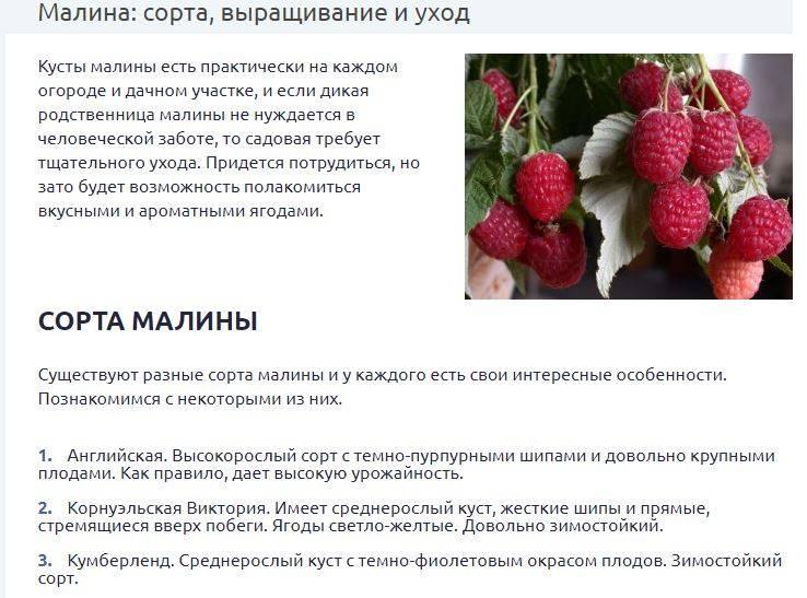 Описание сорта малины журавлик: посадка и уход, урожайность