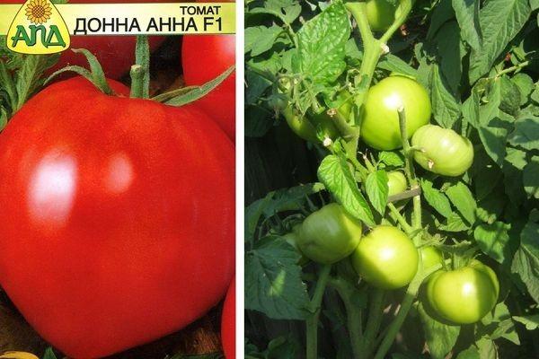 Томат примадонна: описание, отзывы, фото, урожайность   tomatland.ru