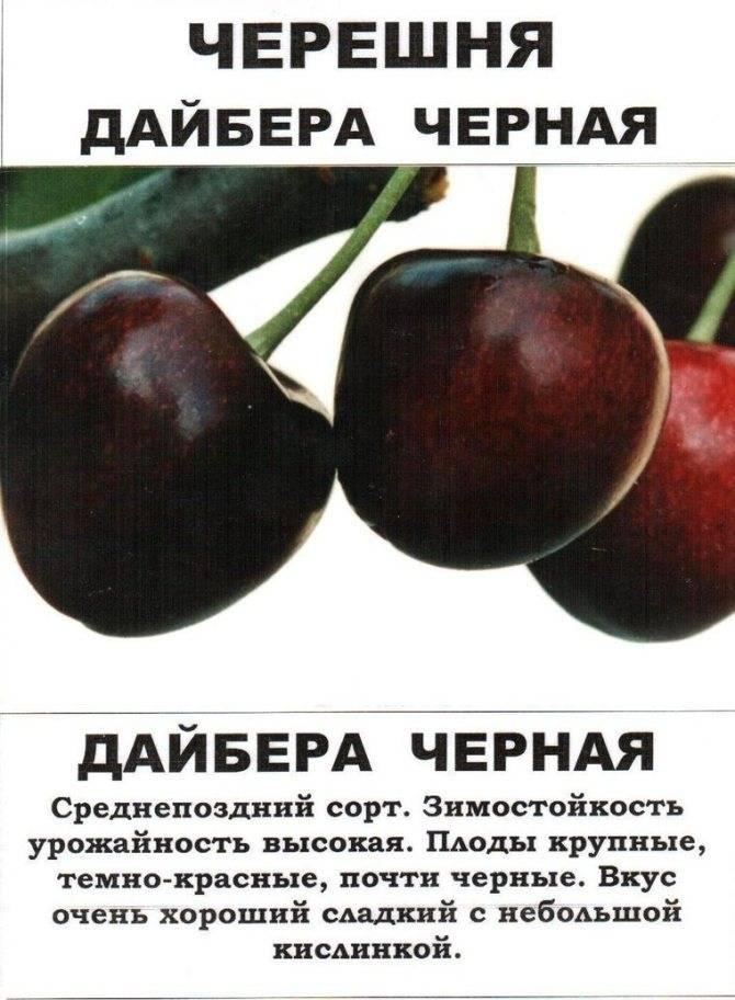 Сорта черешни для сибири, урала и других регионов россии: названия и описание с фото