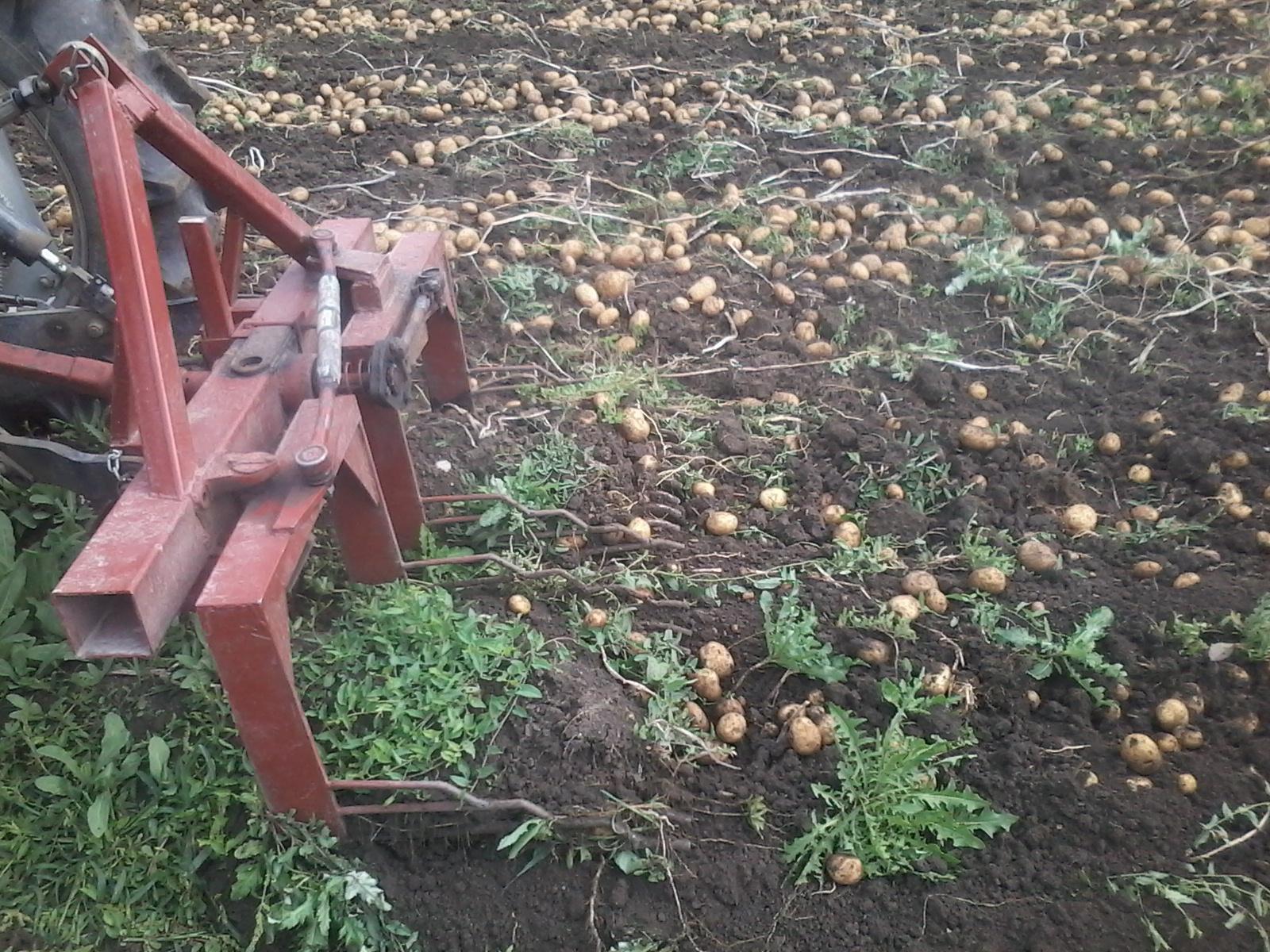 Прополка картошки: способы и инструменты, приспособления для картофеля