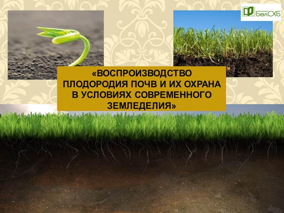Плодородие почвы: виды, от чего зависит, как повысить