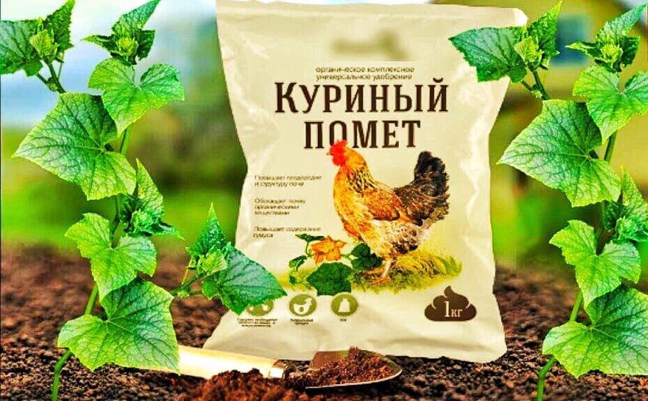 Как подкормить огурцы куриным пометом: как и сколько вносить в качестве удобрения