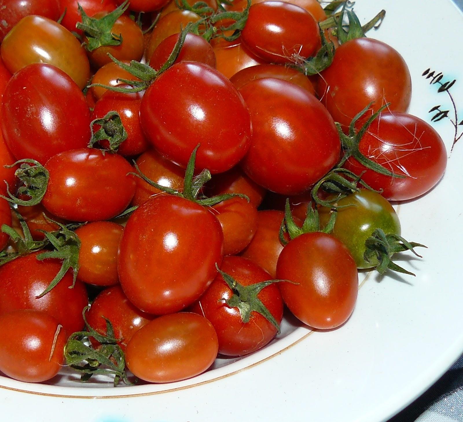 «красным красно f1» — крупные томаты для вкусных салатов