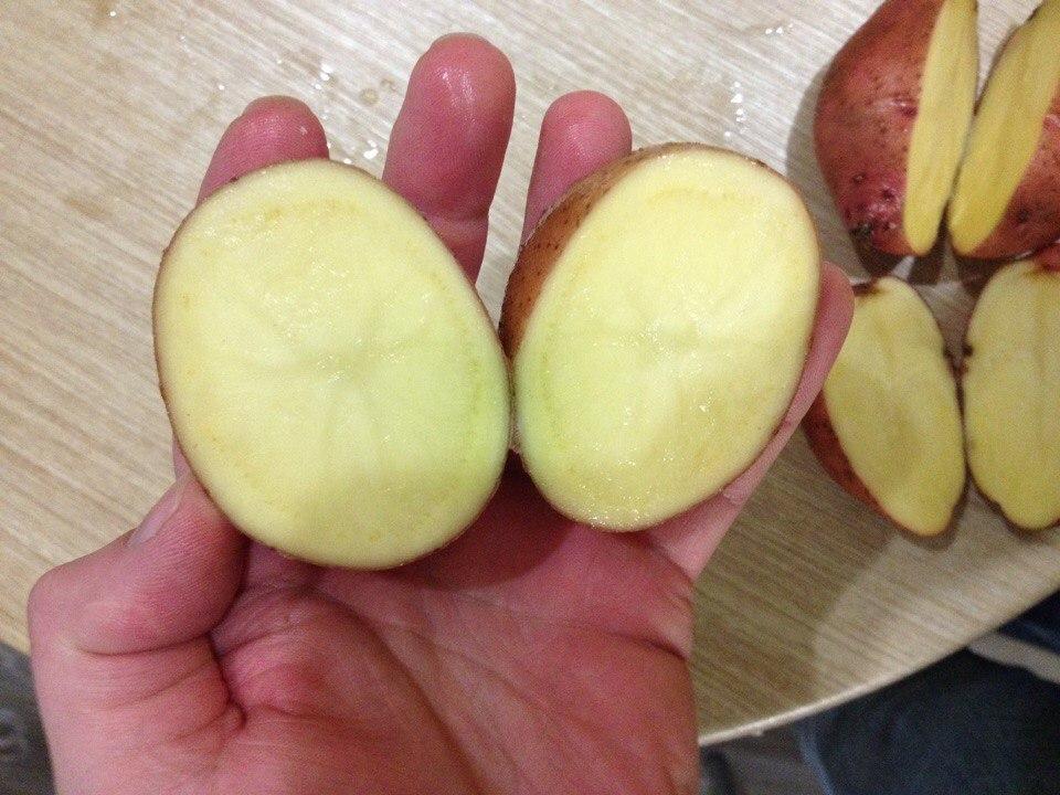 Картофель журавинка: описание сорта, характеристика, фото русский фермер