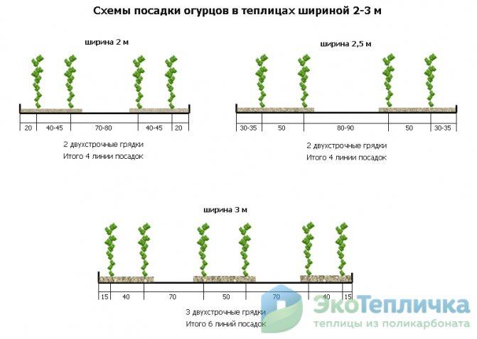 Когда сажать огурцы в открытый грунт семенами и рассадой: сроки и температура