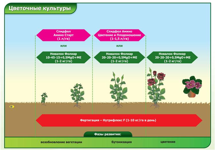 Удобрение для картофеля: чем, когда и как удобрять