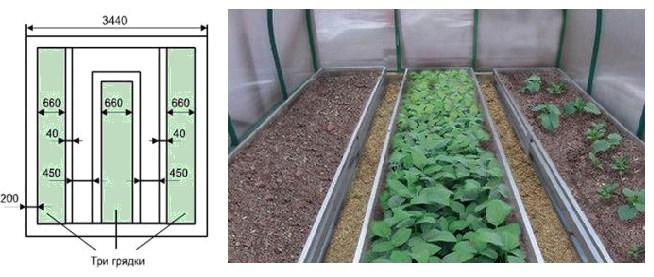 Обильный урожай, или при чем здесь расстояние между помидорами