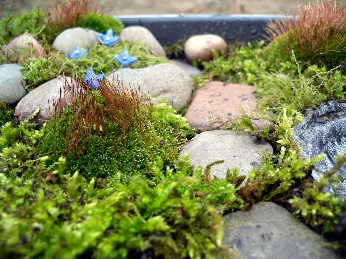 Декоративный стабилизированный и живой мох в интерьере: панно, стены из декоративного цветущего мха