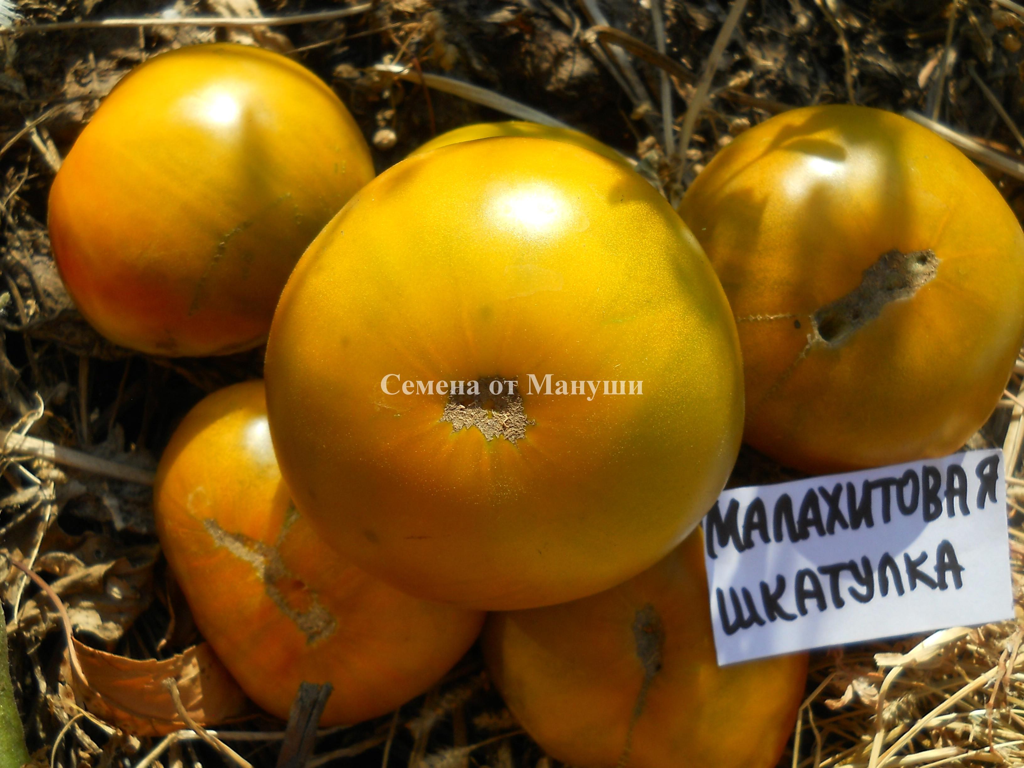 Томат малахитовая шкатулка — характеристика и описание сорта, фото, урожайность, отзывы, видео