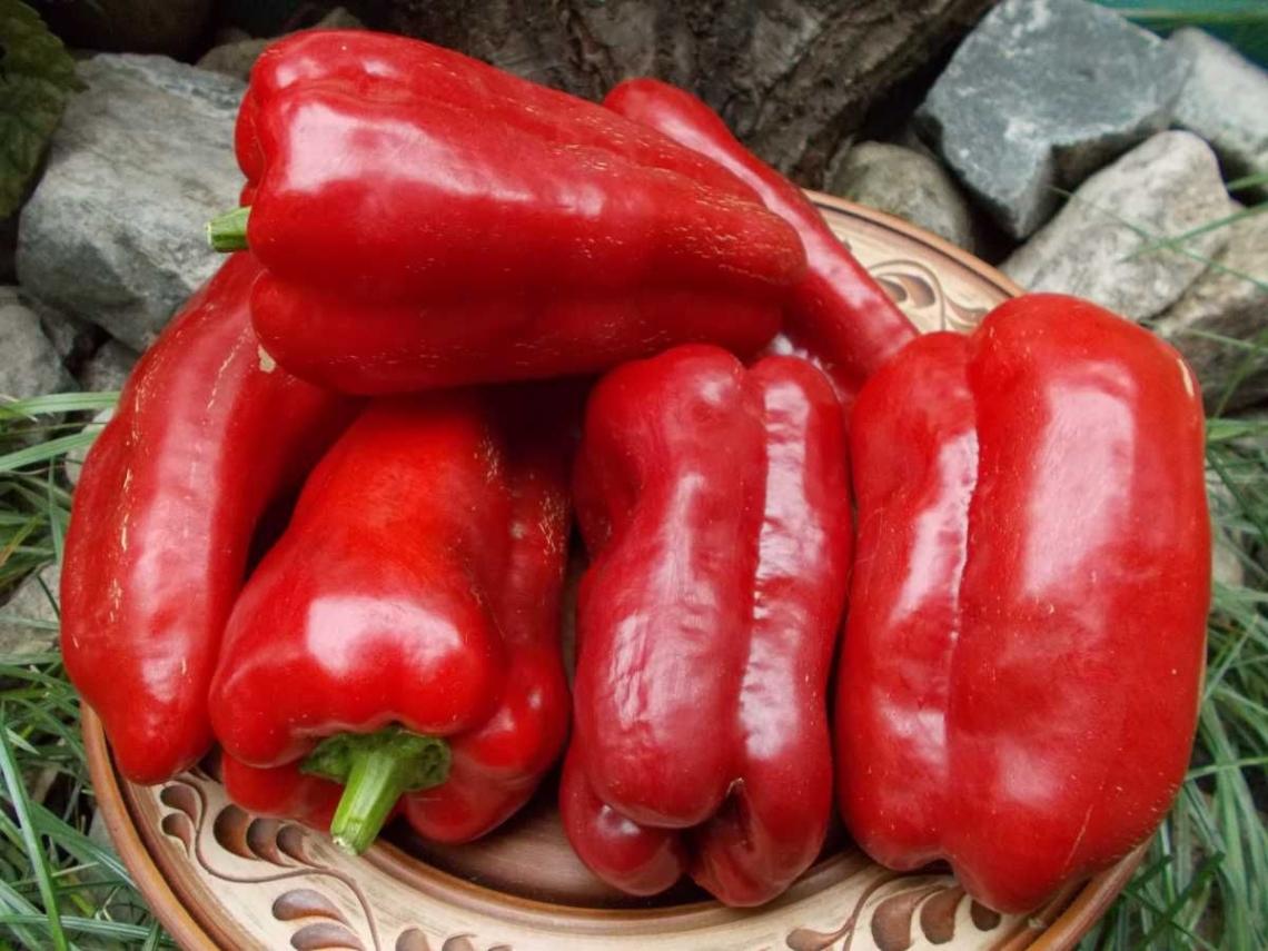 Перец подарок молдовы: описание сорта, фото, отзывы, характеристика плодов, урожайность