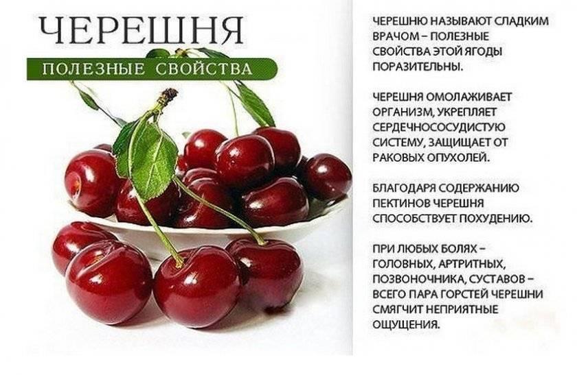 Слива - всё о свойствах ягоды, сорта слив с фото и рецепт пирога
