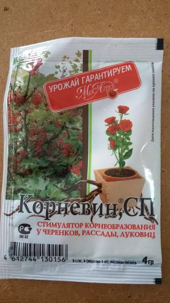 Корневин: инструкция по применению для растений
