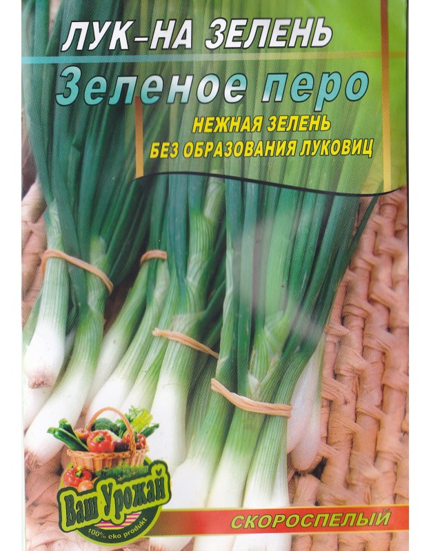 Лук на перо и какие лучшие сорта купить для выгонки зеленого лука