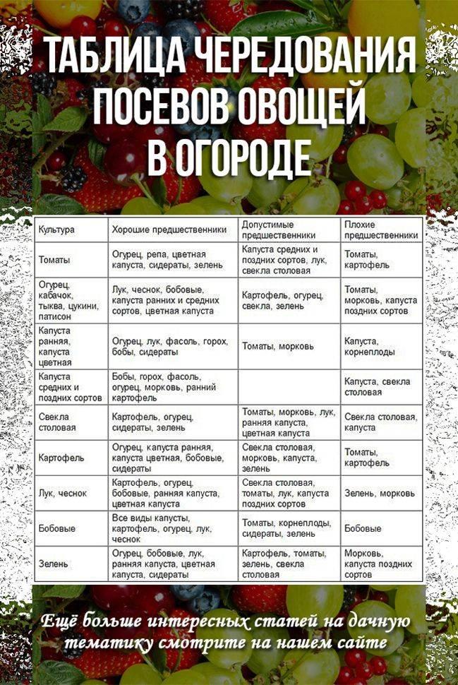 Лучшие предшественники для томатов. необходимость севооборота. зачем чередовать культуры на участке | дачная жизнь