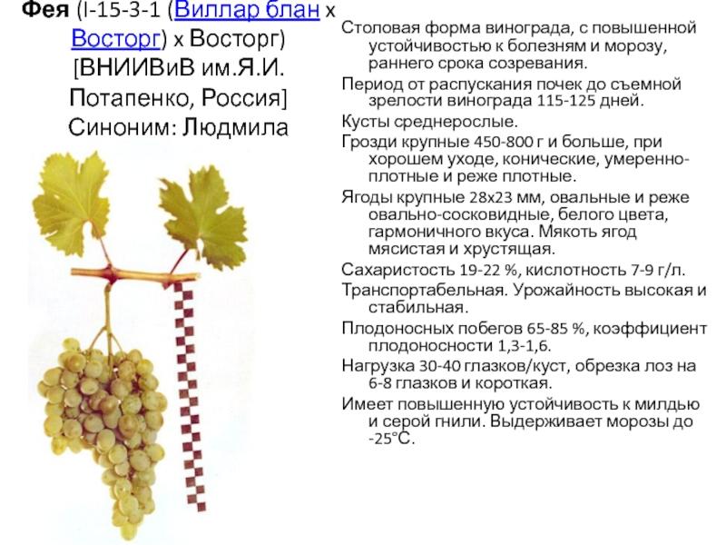 Виноград гарольд: уход, описание сорта