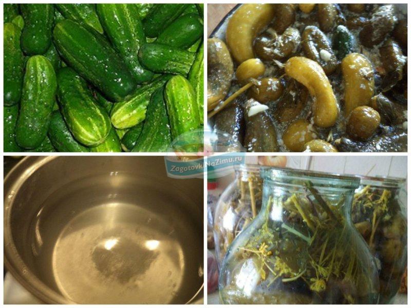 Рецепт холодного засола огурцов на зиму в банках - 8 пошаговых фото в рецепте